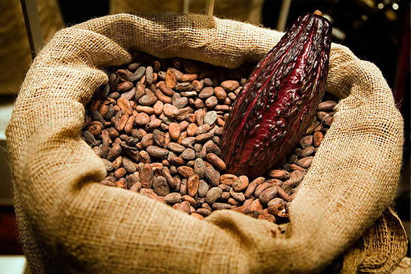 cocoa-bg3