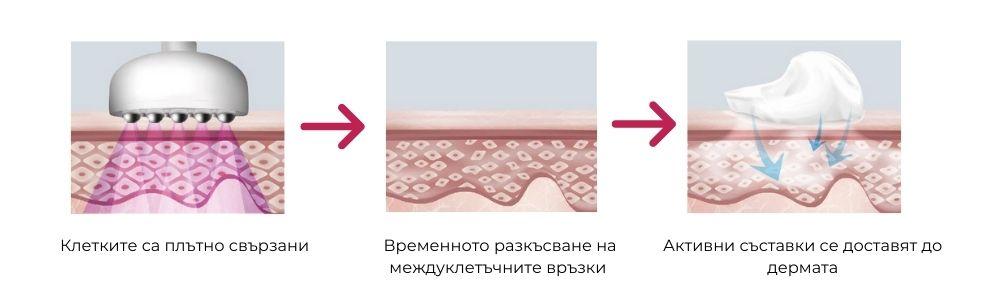 Клетките са плътно свързани